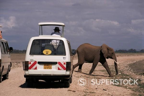 Stock Photo: 1890-19238 Tourist safari vehicle and elephant, Amboseli National Park, Kenya, East Africa, Africa