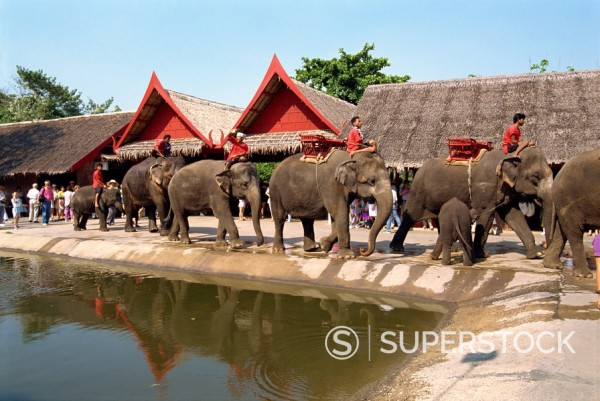 Stock Photo: 1890-2206 Elephant parade, Rose Garden, near Bangkok, Thailand, Southeast Asia, Asia