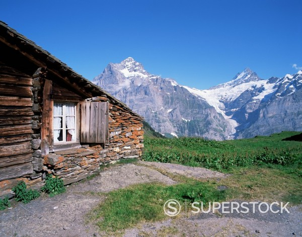 View from Grindelwald_First to Wetterhorn and Schreckhorn, Bernese Oberland, Swiss Alps, Switzerland, Europe : Stock Photo