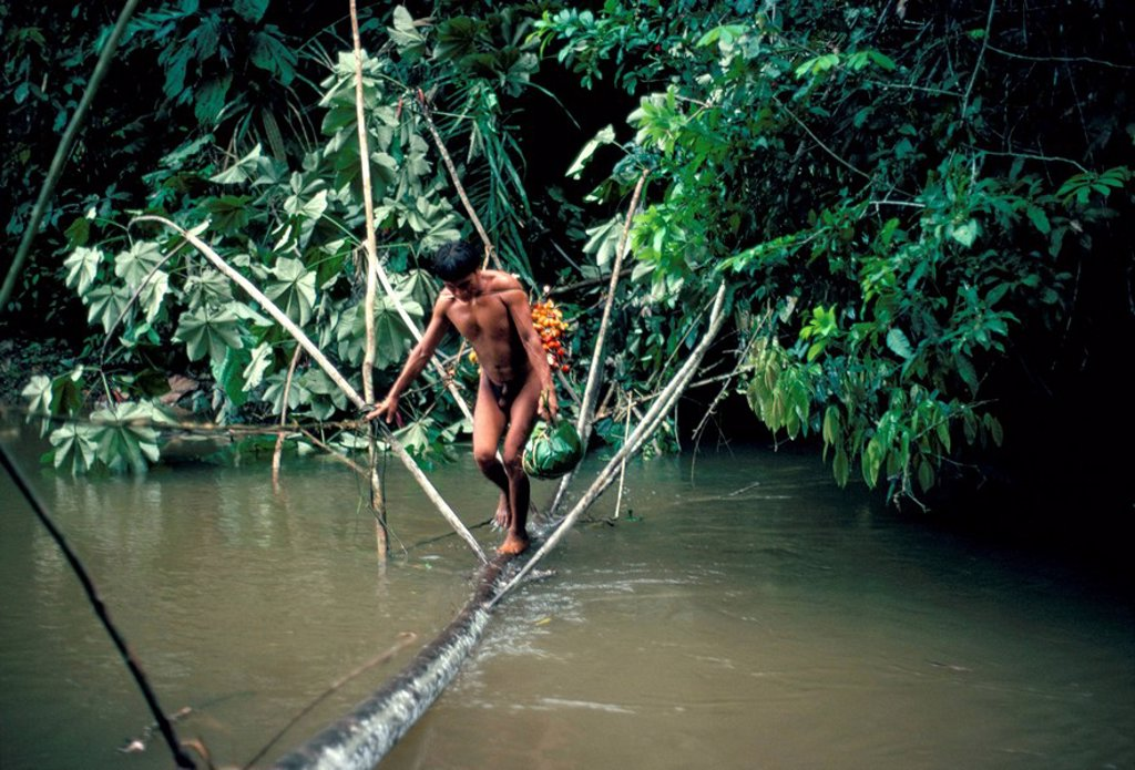 Yanomami man carrying peach palm fruit crossing a river, Brazil, South America : Stock Photo