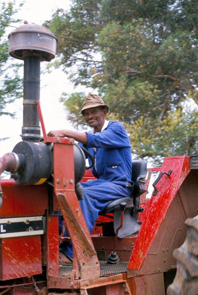 Stock Photo: 1890-24348 Farm worker on tractor, South Africa, Africa