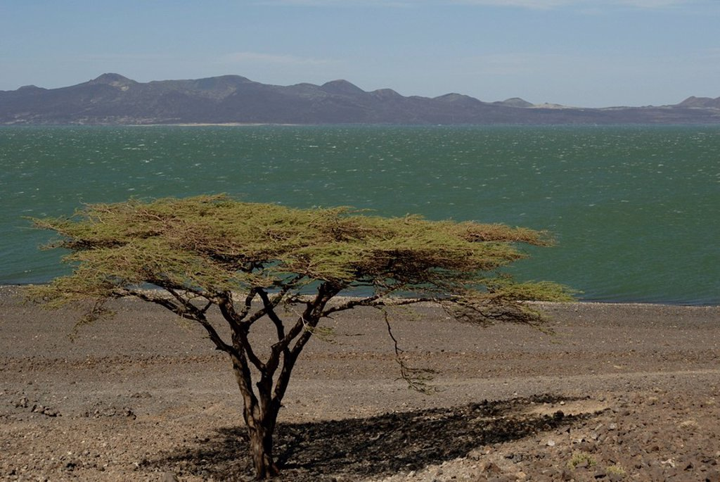 Lake Turkana, Kenya, East Africa, Africa : Stock Photo