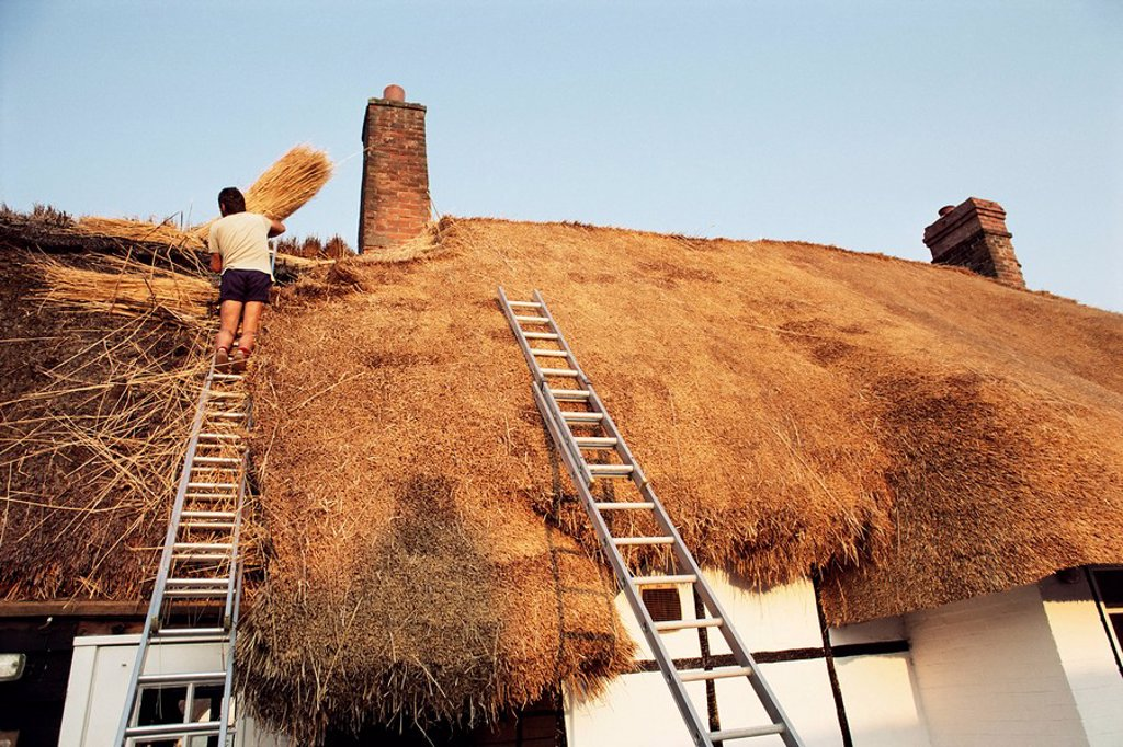 Stock Photo: 1890-26392 Thatcher at work renewing thatch on cottage, England, United Kingdom, Europe