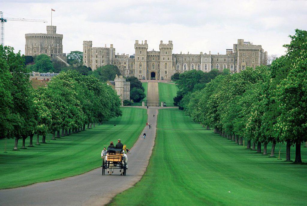 Stock Photo: 1890-27317 The Long Walk and Windsor Castle, Windsor, Berkshire, England, United Kingdom, Europe