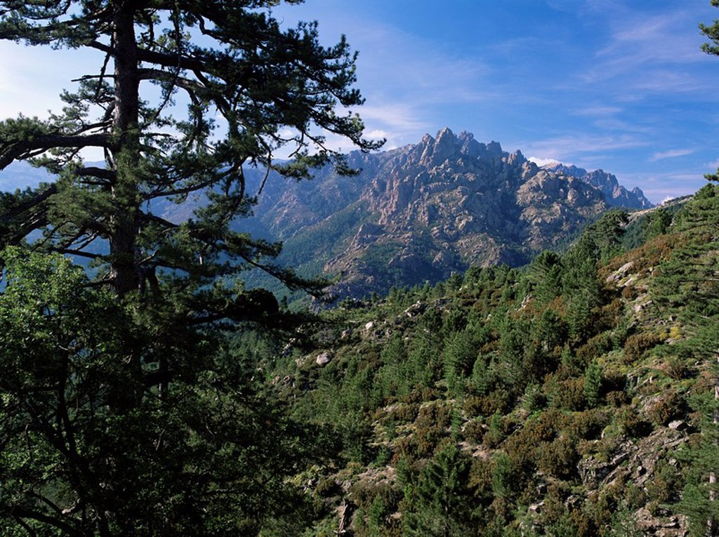 Stock Photo: 1890-28096 Col du Bavella, Corsica, France, Europe
