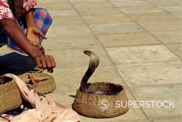 Stock Photo: 1890-3024 Snake charmer on the waterfront, Colombo, Sri Lanka, Asia