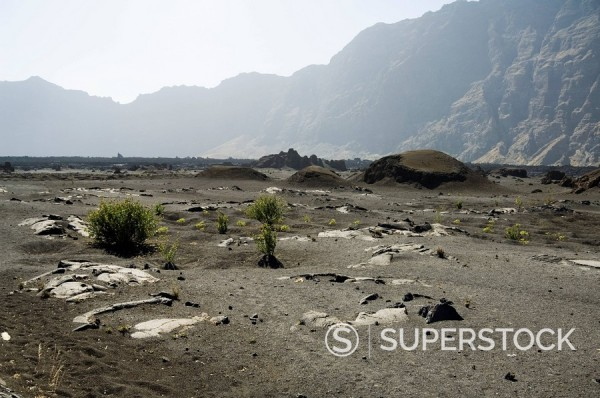 Stock Photo: 1890-35204 Vegetation gowing well in the fertile soil of the volcanic caldera, Fogo Fire, Cape Verde Islands, Africa