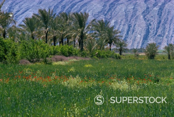 Stock Photo: 1890-3797 Landscape near Kagerum, Iran, Middle East
