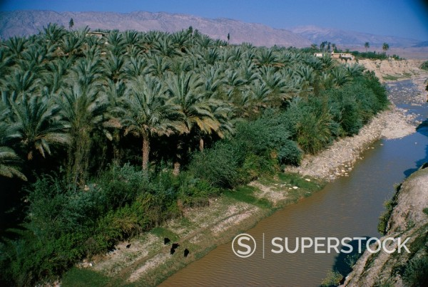 Date palms groves, southern area, Iran, Middle East : Stock Photo