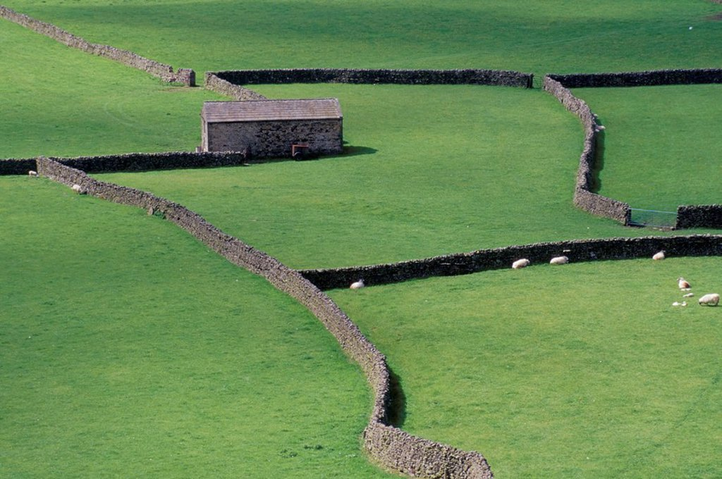 Stone barn and dry stone walls, Gunnerside, Swaledale, Yorkshire, England, United Kingdom, Europe : Stock Photo