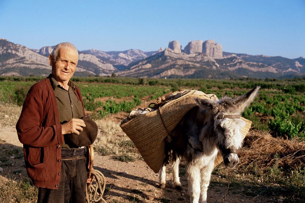 Man and donkey, near Tarragona, Catalonia Cataluna Catalunya, Spain, Europe : Stock Photo
