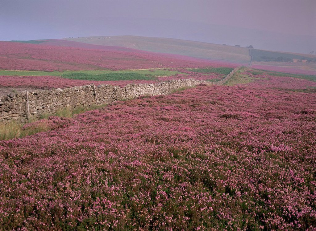 Moors near Grinton, Yorkshire, England, United Kingdom, Europe : Stock Photo