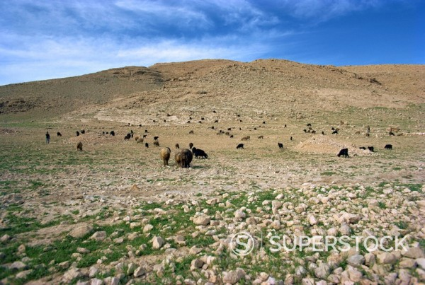 Landscape near Shiraz, Iran, Middle East : Stock Photo