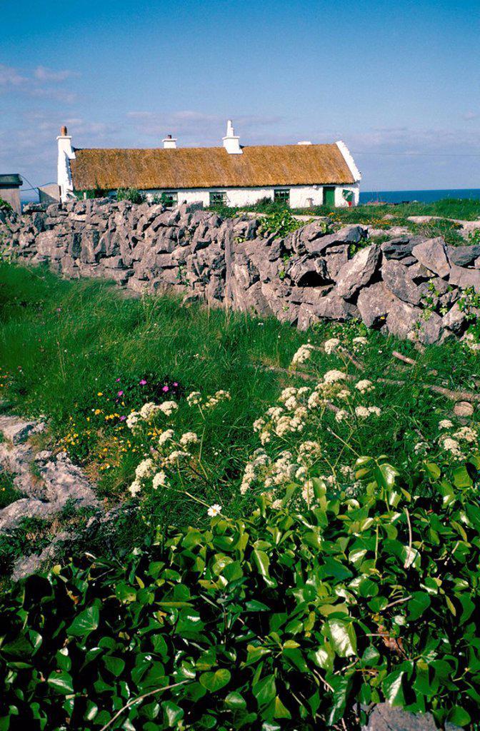 Stock Photo: 1890-43184 Inishmore Inishmor, Isles of Aran, Eire Ireland, Europe