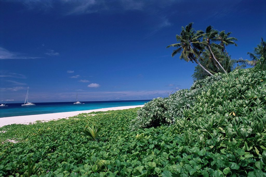 Stock Photo: 1890-44231 Nature reserve and beach, Ile Aride Aride Island, Seychelles, Indian Ocean, Africa