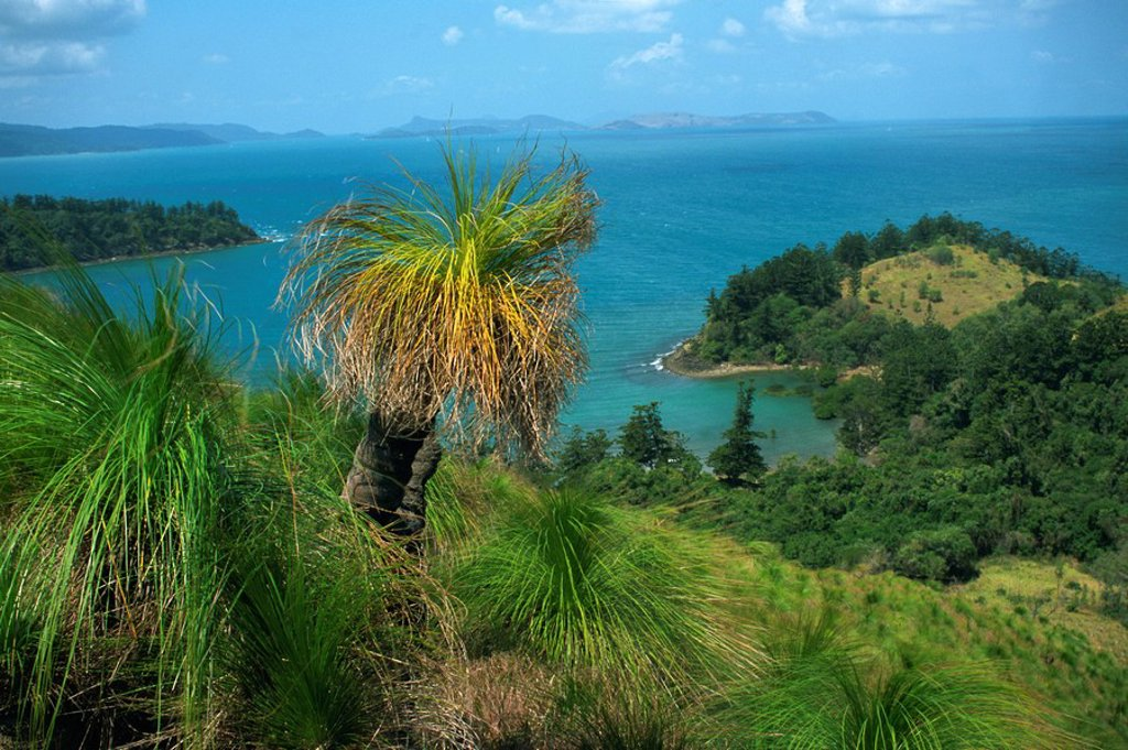 View over Oyster Bay, South Molle Island, Whitsundays, Queensland, Australia, Pacific : Stock Photo