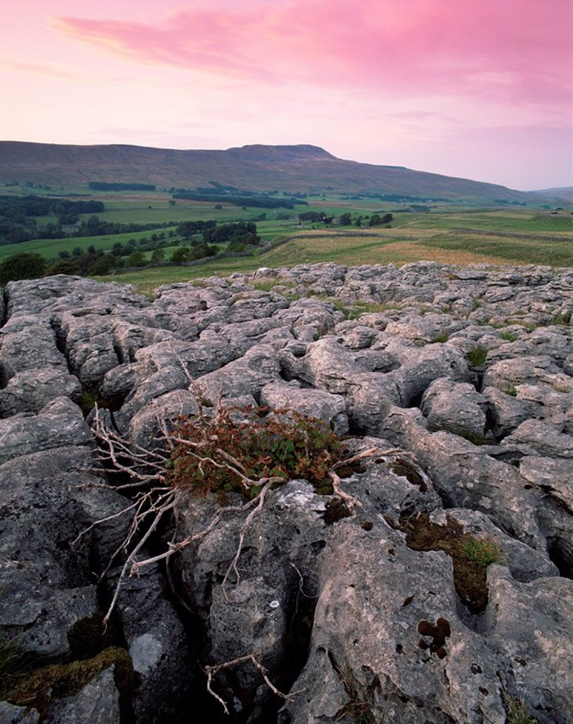 Limestone pavements near Chapel_le_Dale, Yorkshire Dales National Park, Yorkshire, England, United Kingdom, Europe : Stock Photo