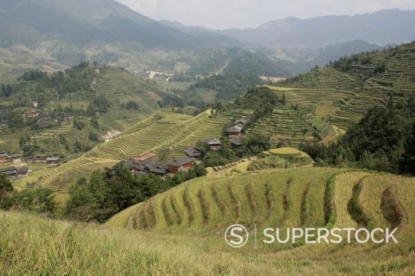 Stock Photo: 1890-57258 Longsheng terraced ricefields, Guilin, Guangxi Province, China, Asia