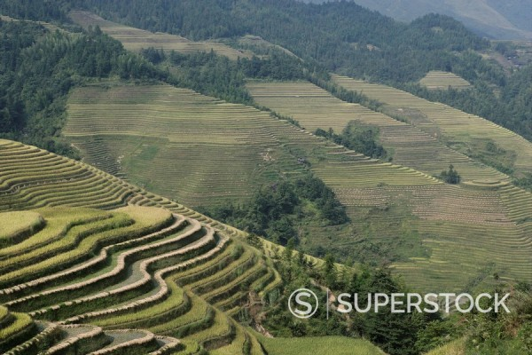 Stock Photo: 1890-57264 Longsheng terraced ricefields, Guilin, Guangxi Province, China, Asia
