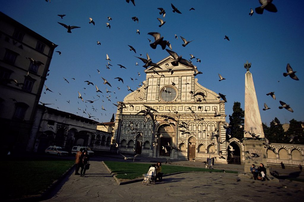 Pigeons in flight in the Piazza Santa Maria Novella, Florence, Tuscany, Italy, Europe : Stock Photo