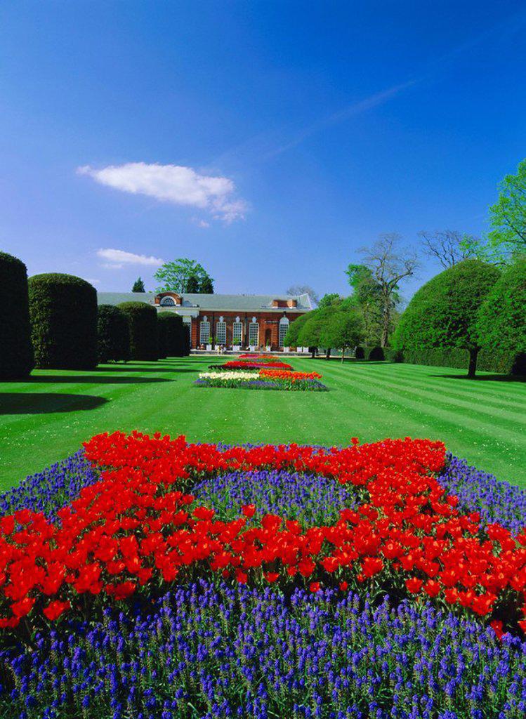 Red tulips and the Orangery, Kensington Gardens, London, England, UK : Stock Photo