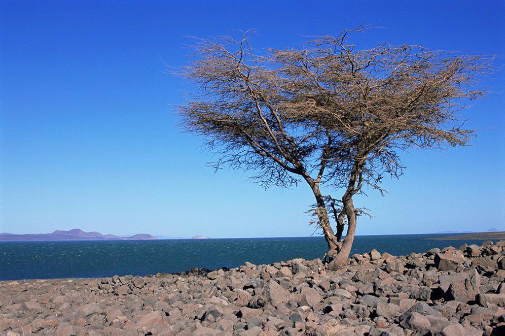 Lake Turkana, Kenya, East Africa, Africa : Stock Photo