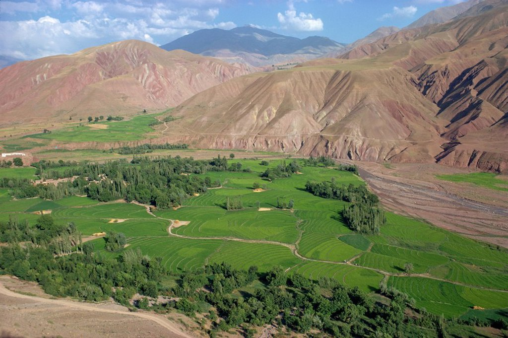 Stock Photo: 1890-6394 Rice fields and terracing in a valley in the Shahrak region, Iran, Middle East