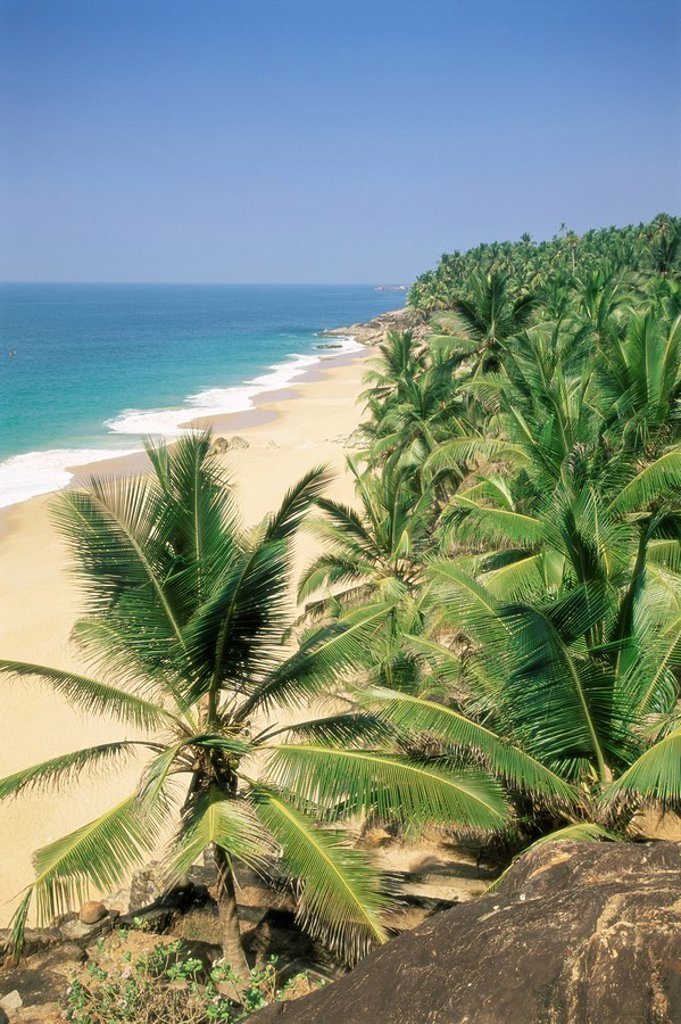 Stock Photo: 1890-64273 Coconut palms and beach, Kovalam, Kerala state, India, Asia