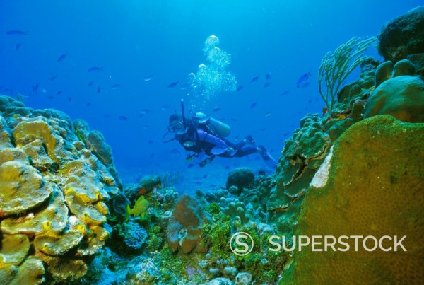 Stock Photo: 1890-64977 Underwater diver and corals, Cozumel Island, Mexico