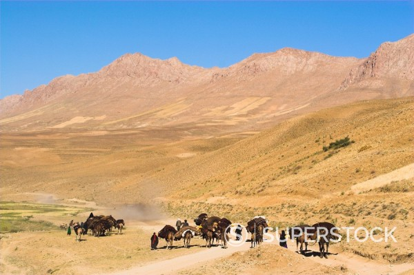 Kuchie nomad camel train, between Chakhcharan and Jam, Afghanistan, Asia : Stock Photo