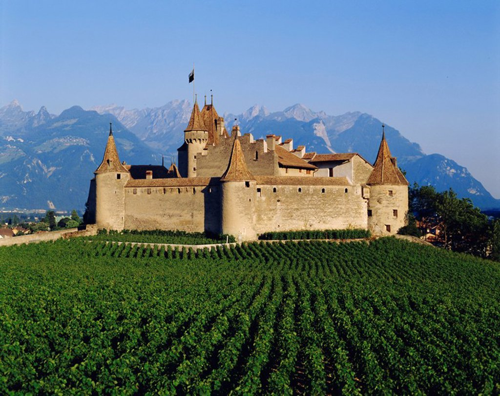 Aigle Chateau and vineyard, near Lac Leman, Switzerland : Stock Photo