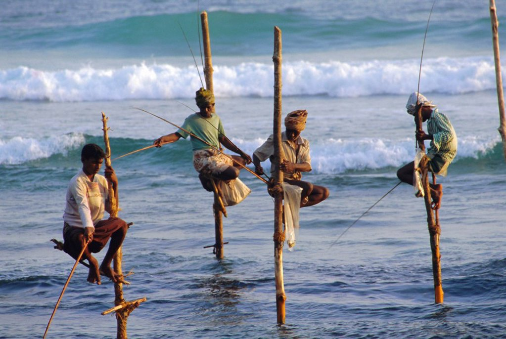Stock Photo: 1890-68130 Stilt fishermen, Weligama, Sri Lanka, Asia