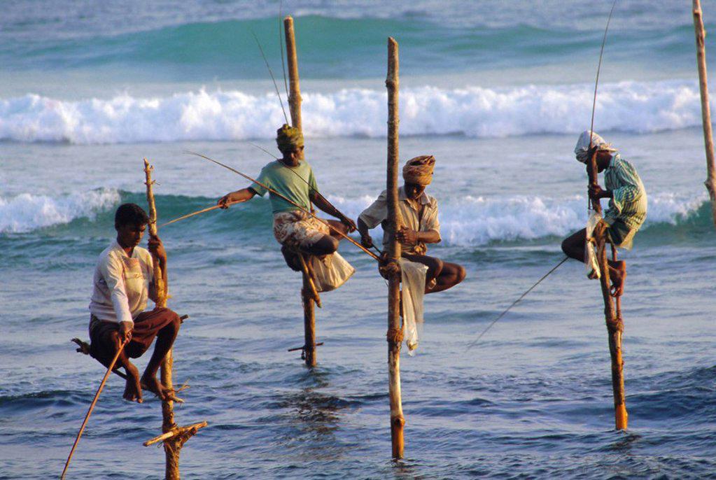 Stilt fishermen, Weligama, Sri Lanka, Asia : Stock Photo