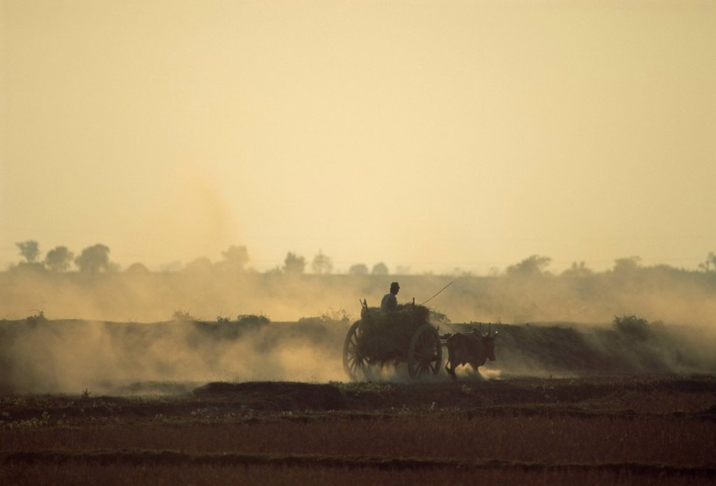 Stock Photo: 1890-68201 Bullock cart returning home in the evening, near Bago Pegu, Myanmar Burma, Asia