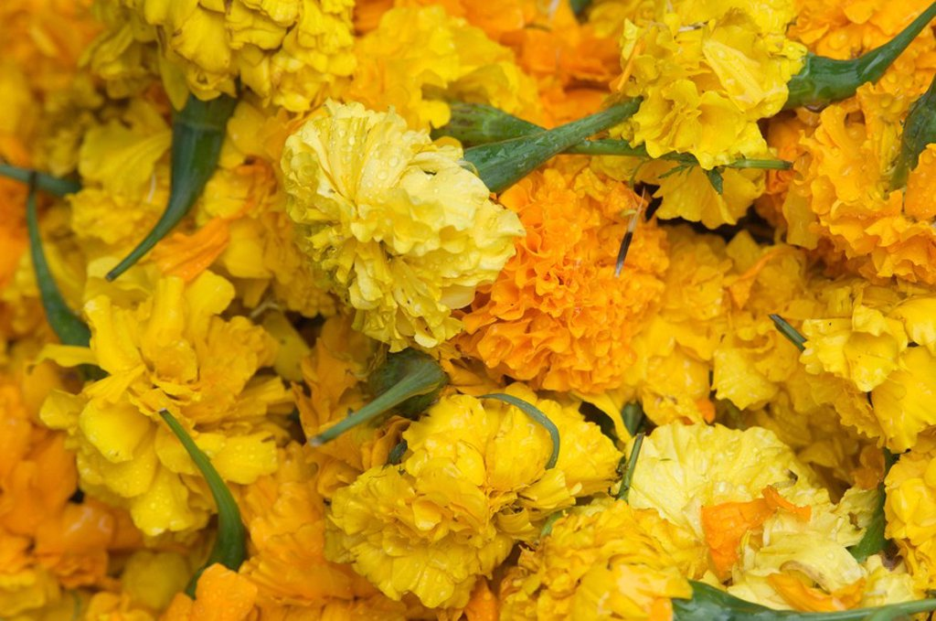Yellow carnations for sale for temple offerings in Little India, Singapore, South East Asia : Stock Photo