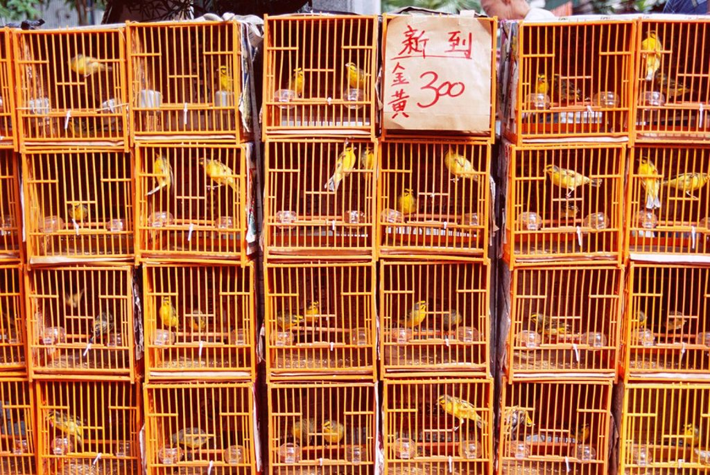 Caged birds for sale, Yuen Po Street, Bird Garden, Mong Kok, Kowloon, Hong Kong, China, Asia : Stock Photo