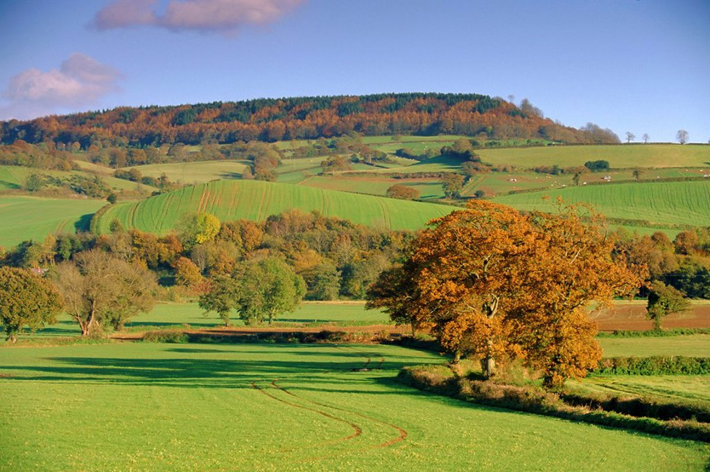 Stock Photo: 1890-70305 Countryside in autumn in the Otter Valley, Devon, England, UK