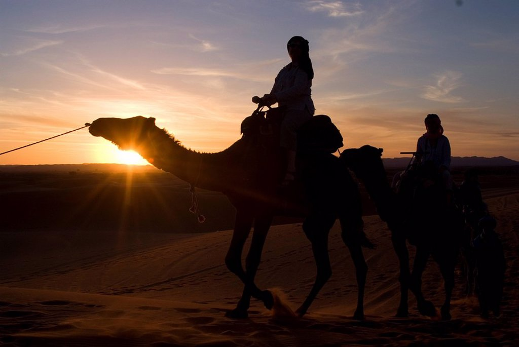 Stock Photo: 1890-73351 Dromedaries taking tourists on a sunset ride, Merzouga, Morocco, North Africa, Africa