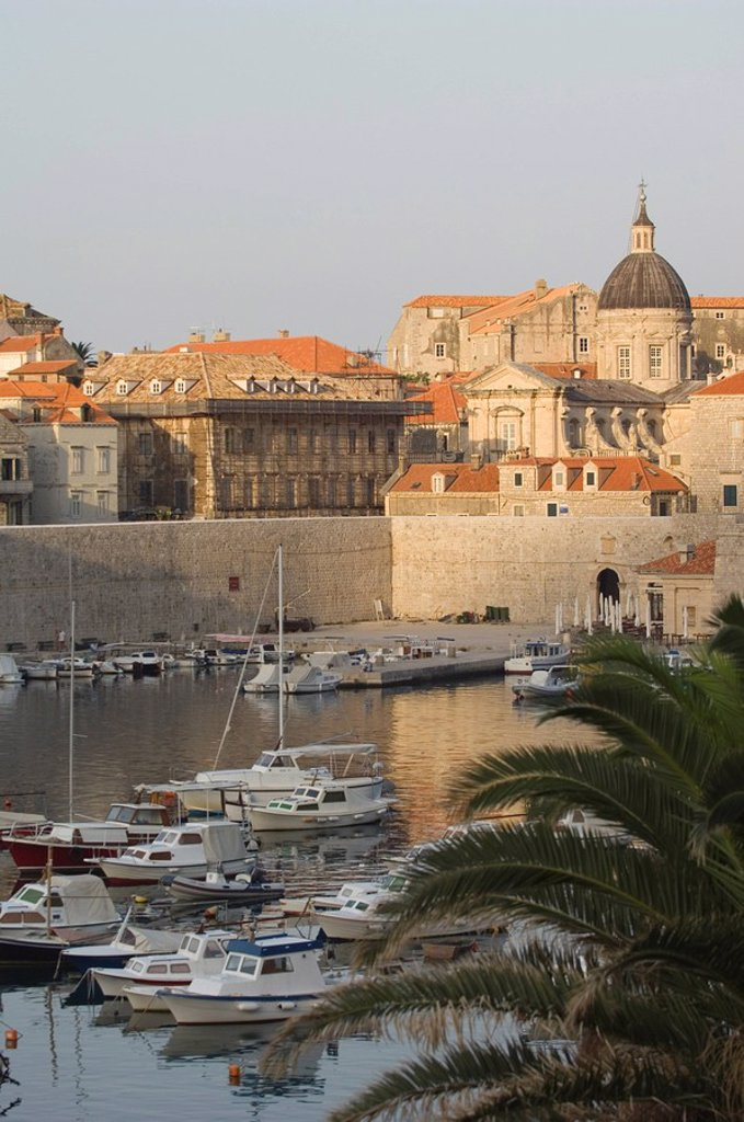 Stock Photo: 1890-77172 Palm at Harbour, Dubrovnik, Croatia