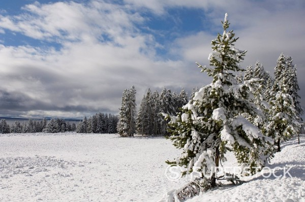 Yellowstone National Park area in winter, Wyoming, United States of America, North America : Stock Photo