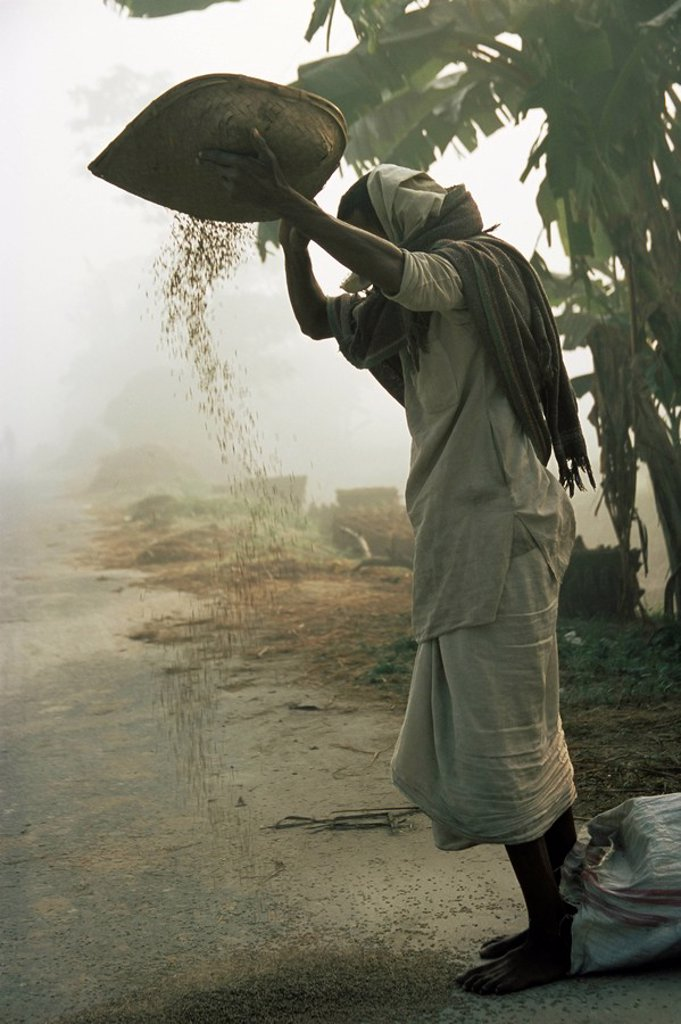 Stock Photo: 1890-81455 Woman sifting grain, Vaishali, Bihar state, India, Asia