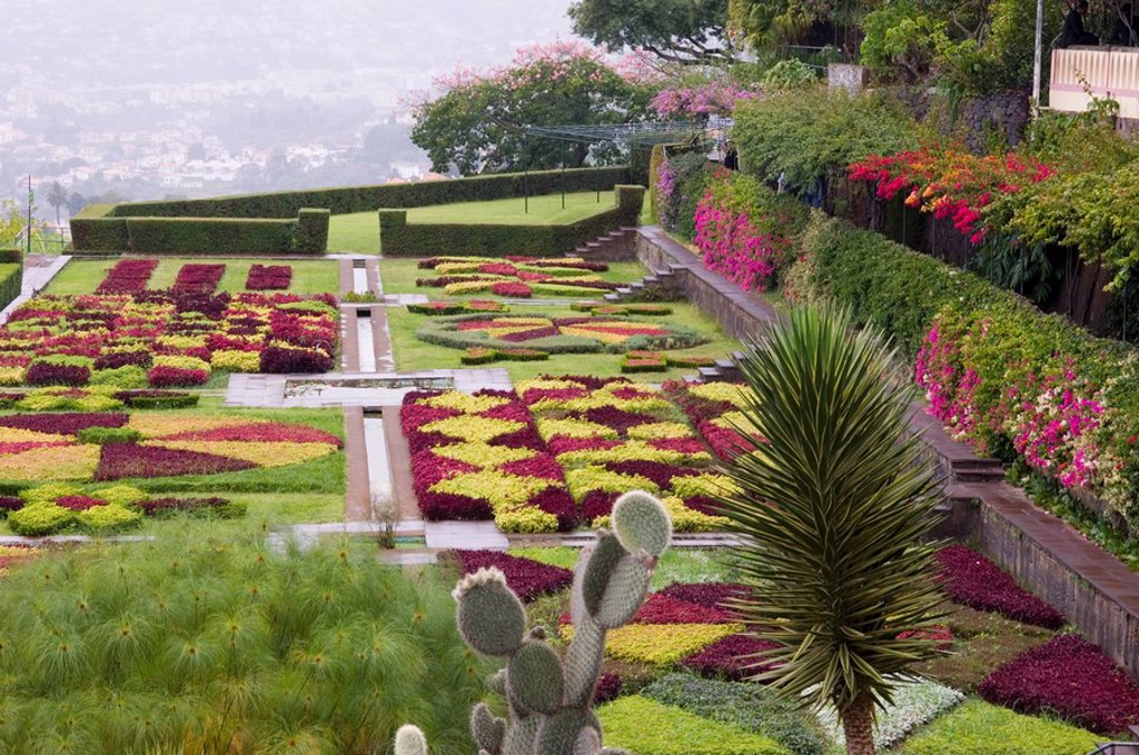 A terrace planted in geometric shapes with contrasting red and green plants in the Jardim Botanico, Funchal, Madeira, Portugal, Europe : Stock Photo