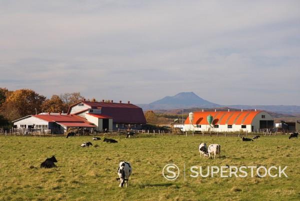 Farm, Hokkaido, Japan, Asia : Stock Photo