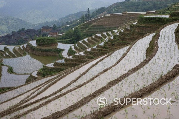 Stock Photo: 1890-85409 Terraced ricefields of Longshen, Guilin, Guangxi Province, China, Asia