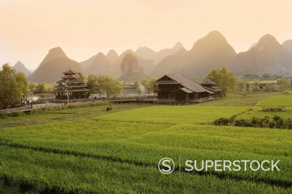Stock Photo: 1890-85446 Rice fields, Yangshuo, Guangxu Province, China, Asia