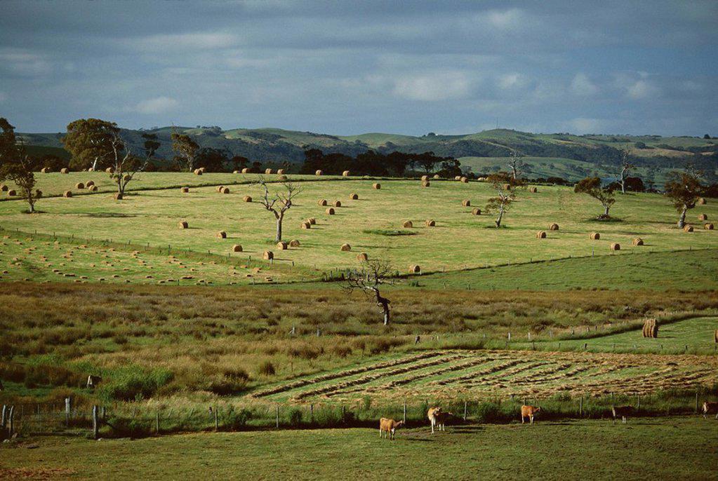 Stock Photo: 1890-88169 Farmland near Willunga, Fleurieu Peninsula, south of Adelaide, South Australia, Australia, Pacific