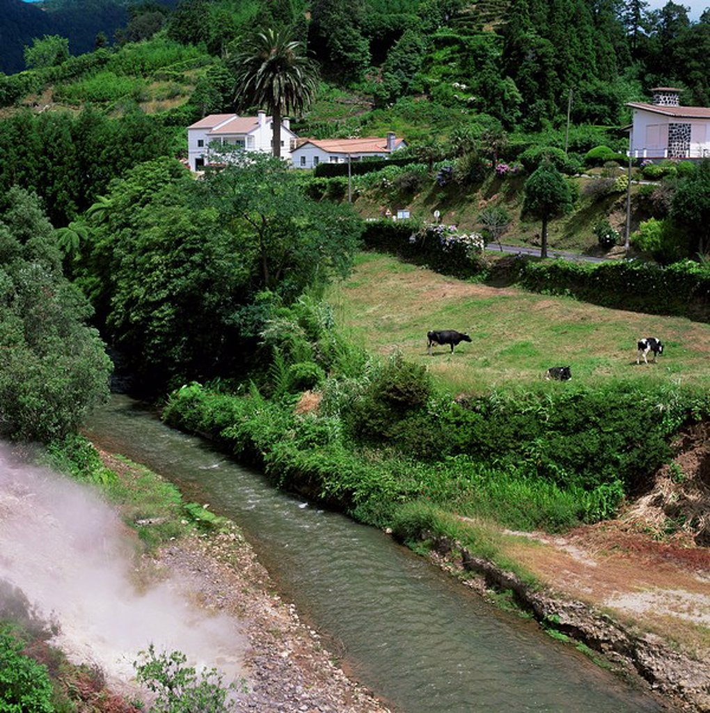 Stock Photo: 1890-8839 Hot springs, Furnas, island of Sao Miguel, Azores, Portugal, Europe