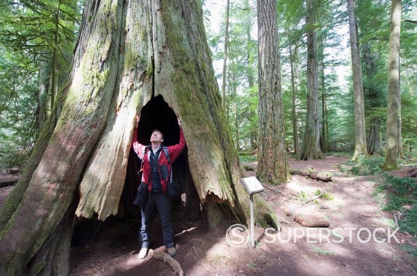 Stock Photo: 1890-92011 A hiker in a hollow tree trunk, Cathedral Grove, MacMillan Provincial Park, Vancouver Island, British Columbia, Canada, North America
