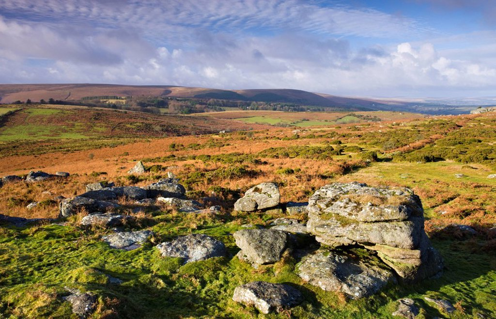Stock Photo: 1890-93616 Granite boulders on Hayne Down, Dartmoor National Park, Devon, England, United Kingdom, Europe