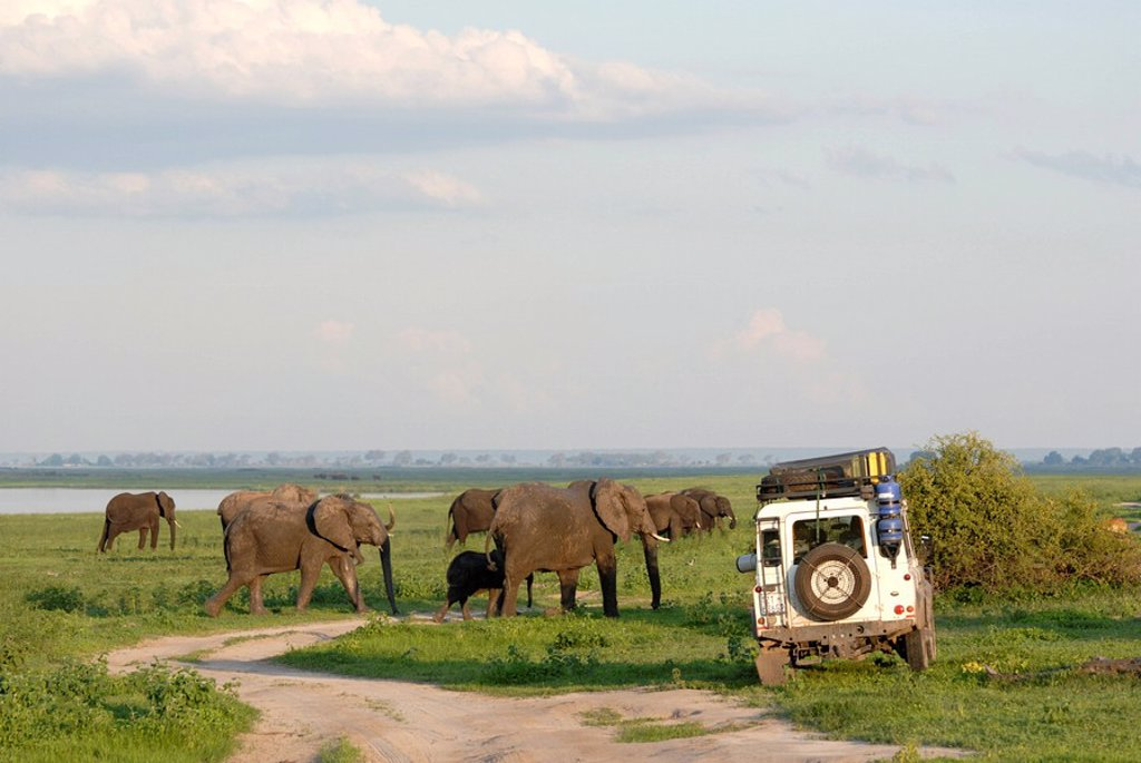 Stock Photo: 1890-96299 Group of elephants and landrover, Chobe National Park, Botswana, Africa